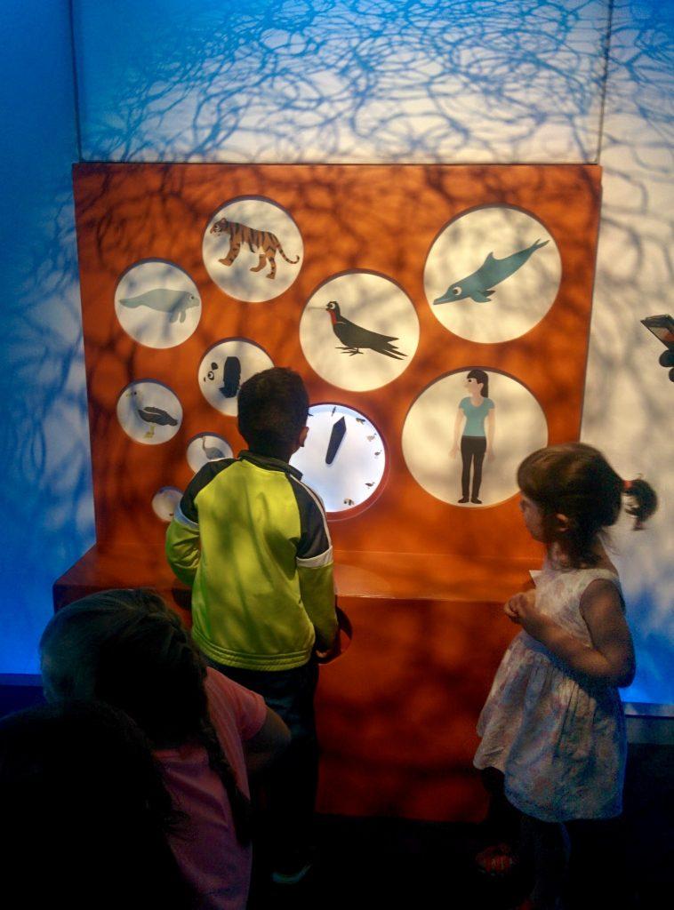 Expo Bebes animais – para 2 a 7 anos